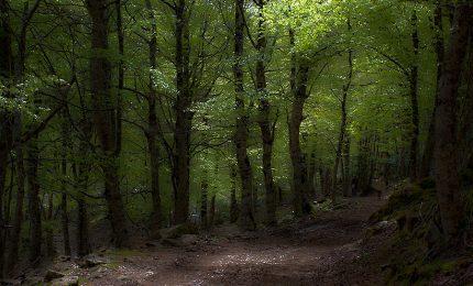 Perché licenziare i forestali siciliani sarebbe una follia
