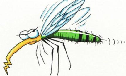 Le zanzarate...