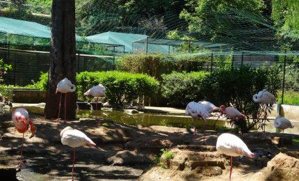 La 'lunga guerra' di Patrizia Monterosso e Rosario da Gela contro gli animali del Parco d'Orleans