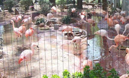 Giardino zoologico di villa d'Orleans: in 30 tra guardie del Corpo forestale e veterinari per portare via 9 uccelli
