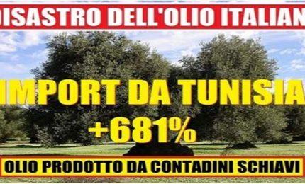 La crisi della Sicilia e il tramonto dell'agricoltura siciliana tra arance invendute e olio d'oliva tunisino