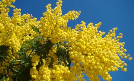 8 Marzo: onore al coraggio della vedova Failla, donna straordinaria e Siciliana vera