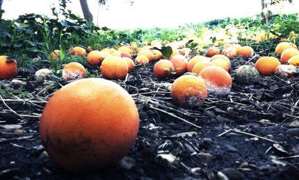 Pachino: agrumicoltori e produttori del pomodorino in piazza per contestare una politica fallimentare
