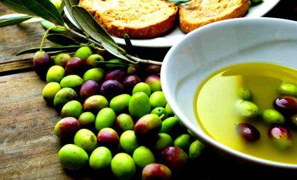 IGP olio d'oliva siciliana: per favore basta con l'enfasi e le bugie!