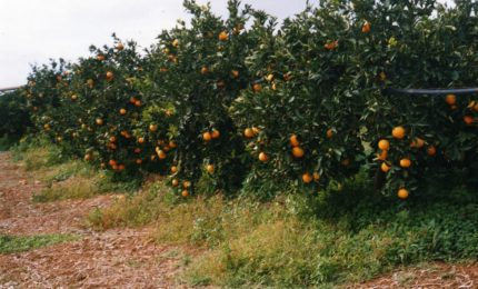 Se l'assessorato all'Agricoltura penalizza gli agricoltori di Ribera e del suo circondario