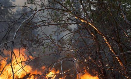 Gli incendi in Sicilia: ma com'è che dei pascoli abbandonati dalla Regione non parla nessuno?