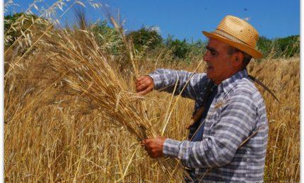 Dobbiamo fermare l'importazione in Sicilia di grano avvelenato