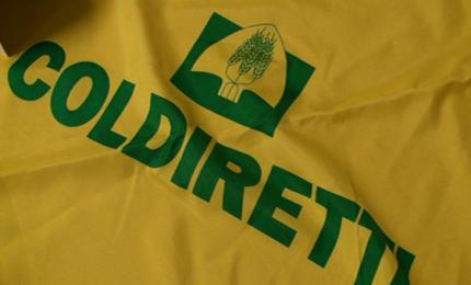 La Coldiretti scopre che tanti prodotti agricoli importati in Italia sono avvelenati. Ma dimentica il grano...