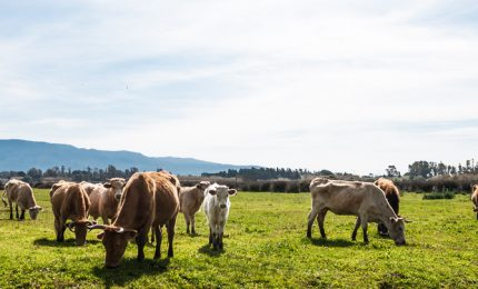 Carne: il 70% degli allevamenti è nel Nord Italia, ma il 65-70% di questo prodotto si consuma al Sud