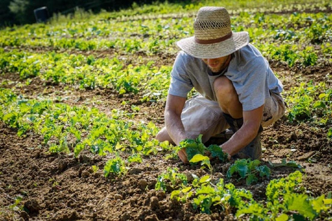 """Agricoltura, FIMA all'attacco: """"Il Governo Renzi quadruplica le comunicazioni IVA. Puntano al land grabbing"""""""