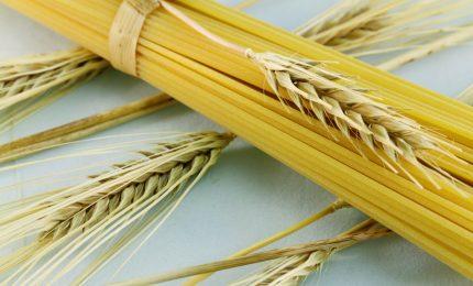Giù le mani dal grano duro del Sud: la Cun deve essere una e al Sud, altro che Bologna!