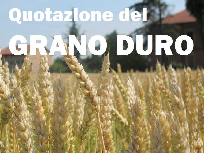 43107e675e I prezzi del grano duro: la grande truffa a danno degli agricoltori del Sud  Italia