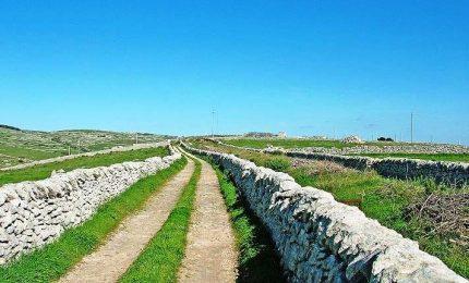 I misteri di Modica e Ragusa: la siccità, gli animali che rifiutano le carrube e gli 'appetiti' sull'altipiano Ibleo