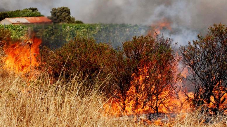 Tagli agli operai del Servizio antincendio del Corpo forestale. E' vero o è una sceneggiata elettorale?