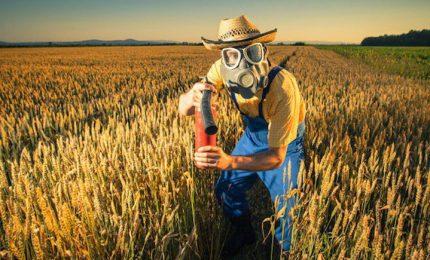 La UE e il grano duro estero: ci stanno avvelenando, ma se ci lamenteremo ci chiederanno i danni!