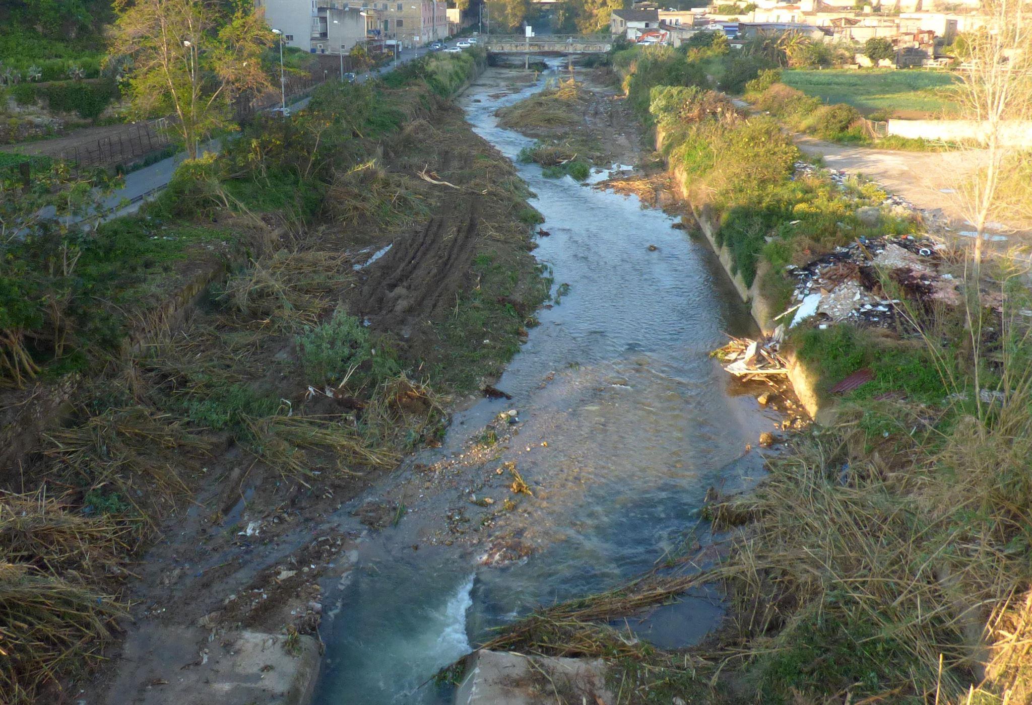 La 'bonifica' del fiume Oreto ha prodotto un pastrocchio: sradicati alberi dove nidificavano uccelli