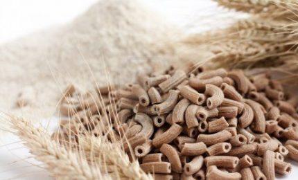 L'accusa di GranoSalus: Slow Food si occupa del glifosato, ma ignora le micotossine DON del grano