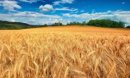 Come difendere la nostra salute e l'agricoltura siciliana? Semplice: acquistando, fin dov'è possibile, cibi siciliani