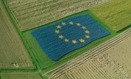 Regione e UE: soldi agli agricoltori siciliani per non coltivare il grano. E così arriva il grano canadese!