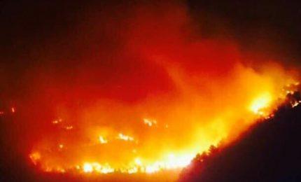 La disinformazione sui forestali siciliani? E' stata la scusa per portare a Roma i fondi di questo settore