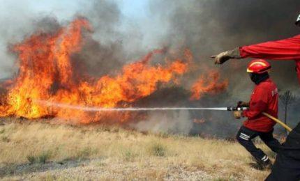 Incendi nei boschi siciliani: tanti arresti, ma nemmeno un operaio della Forestale coinvolto