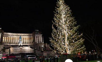 Gli alberi di Natale con gli abeti? Usanza sbagliata. Soprattutto in Sicilia