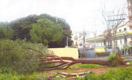 Palermo: a rischio gli alberi della villa di Piazza Principe di Camporeale?