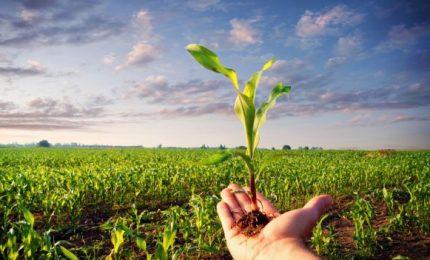 Agricoltura, mancati pagamenti nel 'Bio': interpellanza al Governo regionale