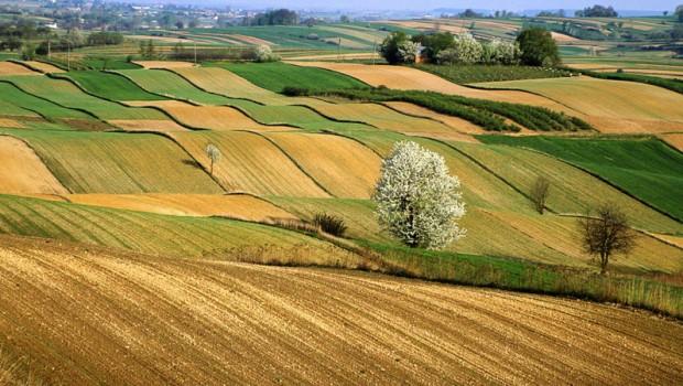 Inchiesta sul PSR Sicilia: come politica e burocrazia bloccano l'agricoltura dell'Isola