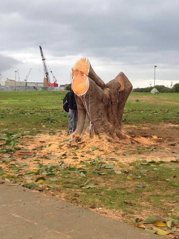 Ancora tagli di alberi a Palermo: basta, non se ne può più!