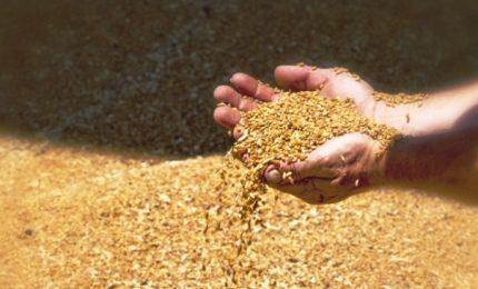 Oggi a Pozzallo arriva un'altra nave carica di grano: nessuno la controllerà!