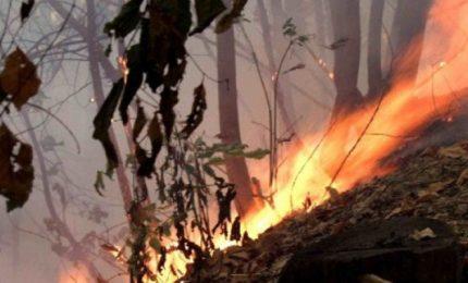 Allarme incendi in Sicilia: siamo a maggio e non ci sono i viali parafuoco