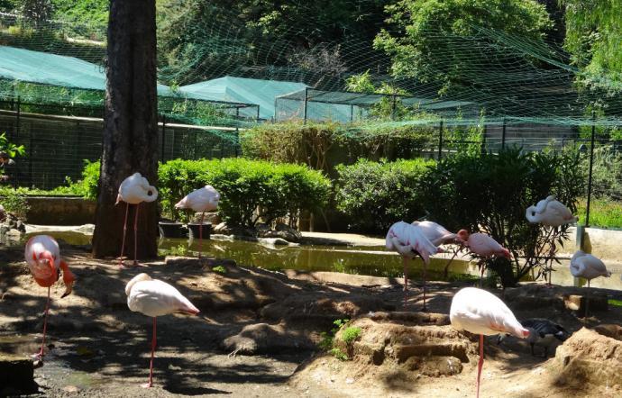 Da Lombardo a Crocetta a Musumeci gli uccelli di Palazzo d'Orleans non si toccano…