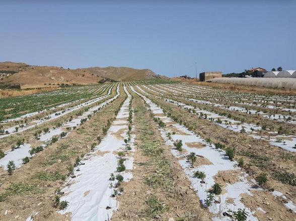 Al via in Sicilia il primo impianto di zucchero di Stevia, il dolcificante naturale che non fa ingrassare