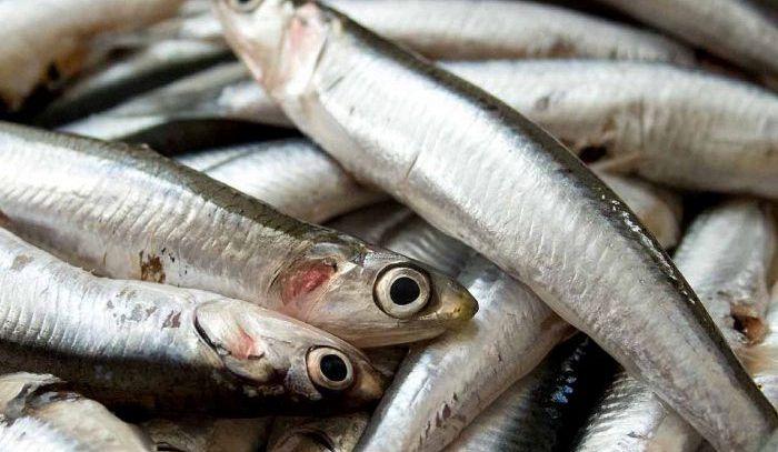 Bioeconomia: dagli scarti del pesce gli omega-3 estratti grazie al limonene