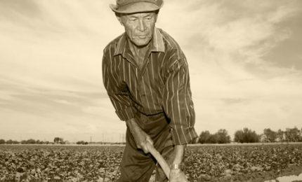 I pensionati più poveri? Gli agricoltori. Letti male i conti dell'INPS per giustificare tagli e legge Fornero!