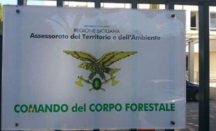 Corpo Forestale della Regione siciliana: la CISL vuole i concorsi. C'è da crederci?