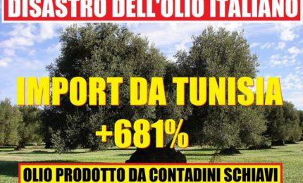 """Mario Di Mauro: """"L'olio d'oliva tunisino? E' utile"""". Ettore Pottino: """"Non è così"""""""