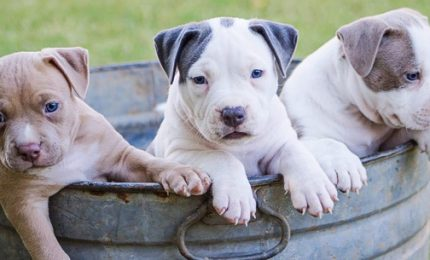 Dal Comune di Palermo lo 'sfratto' a 170 cani: appello su change.org per bloccarlo