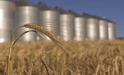 La Sicilia che piace alle Agenzie di rating? Una 'colonia' tra grano canadese, olio d'oliva tunisino e pomodoro cinese