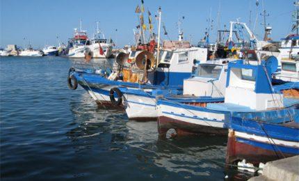 """Pesca, la denuncia di TerrAeliberAzione: """"Ismea ha sospeso il servizio da almeno nove mesi"""""""