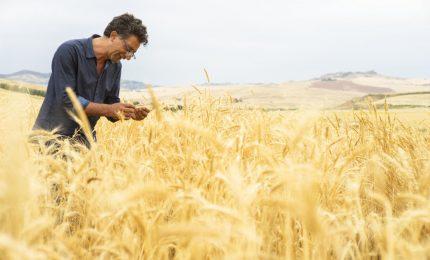 Il lieto fine del 'caso' grano duro biologico: uniti qualche volta si vince