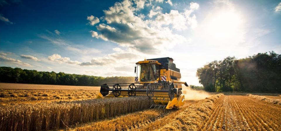 Tra i grillini, al Parlamento nazionale, c'è chi lavora contro l'agricoltura del Sud?