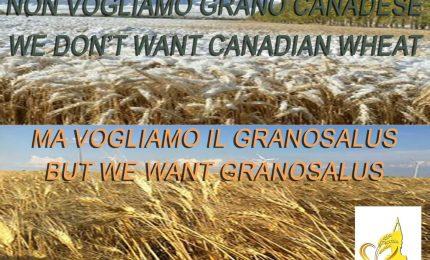 L'Italia? Piena di grano duro canadese, ma non si deve dire. Complimenti alla Lega di Salvini per il Manitoba che arriva al Nord...