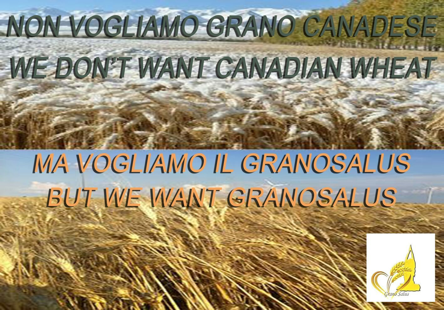 L'Italia? Piena di grano duro canadese, ma non si deve dire. Complimenti alla Lega di Salvini per il Manitoba che arriva al Nord…