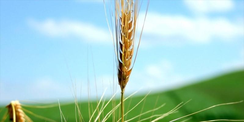 L'accordo tra UE e Governo Conte-Di Maio-Salvini dimentica l'agricoltura del Sud/ MATTINALE 227