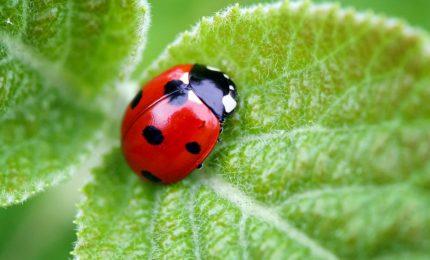 I dubbi sull'agricoltura biologica e sui biocarburanti in uno studio pubblicato da 'Nature'