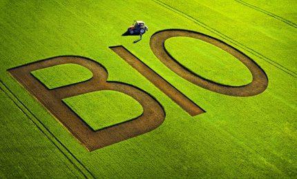 I 'dubbi' sull'agricoltura biologica confutati dal presidente di Federbio