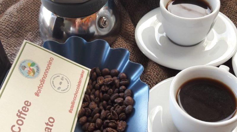 A Terrasini il primo caffè coltivato in Sicilia, anzi in Italia!