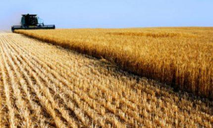 Cosimo Gioia sulla crisi dell'agricoltura: sì agli interventi strutturali, ma serve anche la moratoria